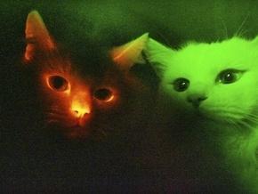 Дослідження: Кішки виявилися праволапими, коти - шульгами