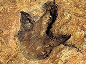 У Франції знайдено найбільші в світі сліди динозаврів