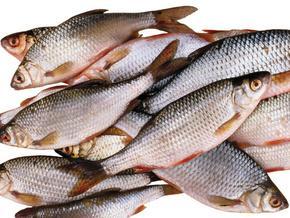 Регулярное употребление рыбы улучшает четкость зрения