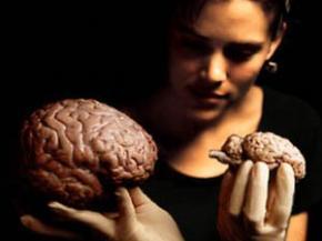 Учёные раскрыли секрет формирования воспоминаний
