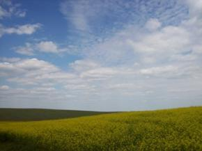 Спільна заява представників громадянського суспільства України щодо невідповідності пролонгації Угоди про перебування ЧФ РФ на території України національним інтересам України