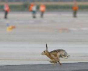 Заєць врізався в літак з італійськими політиками