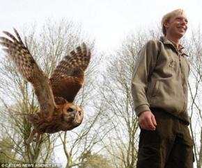 В Великобритании живет сова, которая боится высоты