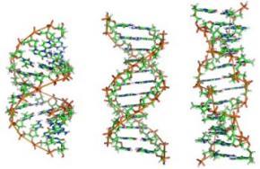 Вчені розшифрували прихований код ДНК