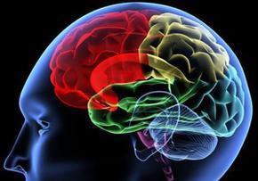 Мозок може контролювати рівень холестерину