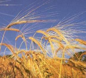 Украина снизит экспорт зерновых