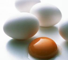 Bчені з'ясували, як з'являється яєчна шкаралупа