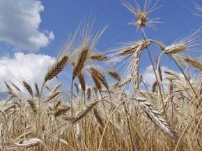 Украина стала одним из мировых лидеров по росту производства продовольствия