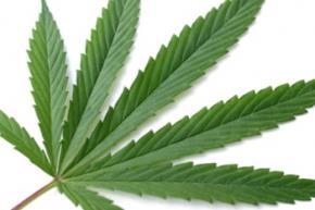 Мешканці Голландії отримали від влади листівки із запахом марихуани