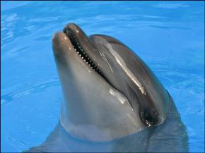 Соціум дельфінів не поступається за складністю людському