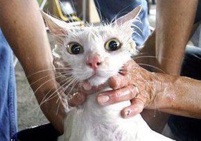 Британца посадят в тюрьму из-за видео с кошкой которую он подогрел в микроволновой печи