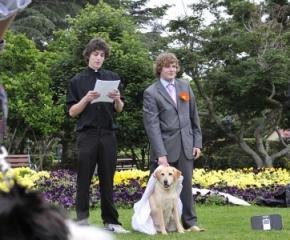 Австралієць одружився з собакою породи лабрадор