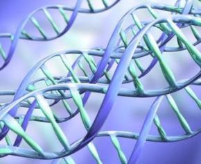 Вчені виявили ген імпульсивності
