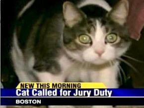 Кота зобов'язали з'явитися на судове засідання