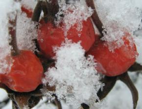 Де взимку взяти вітаміни ?