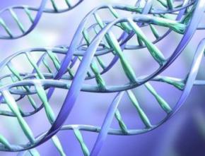 Генетики виявили у людей ген еволюції