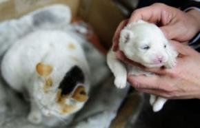 В Китае кошка родила щенка?