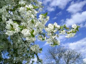 Весна в Украину придет к Пасхе