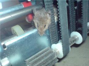 В столице Волыни в банкомате мышь съела деньги
