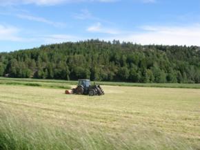 Мелкие украинские фермеры готовы продать свою землю - исследование