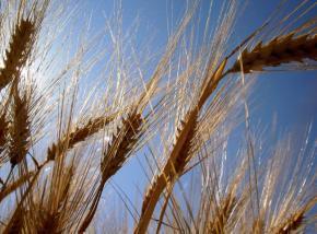 Україна і Росія можуть обвалити світові ціни на зерно