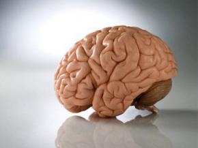 Вчені вперше спостерігали, як відключається мозок