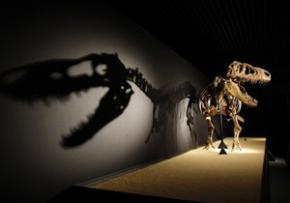 Палеонтологи обнаружили окончательные доказательства гибели динозавров от падения метеорита