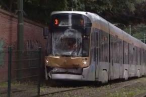 Утки стали причиной столкновения трамваев в Брюсселе