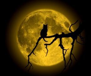 Что делают коты по ночам? - исследование