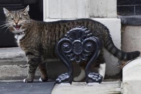 Кішку британського міністра запідозрили в шпигунстві на користь Китаю