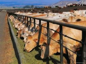 В Украине продолжает расти поголовье скота и птицы