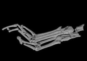 Палеонтологи обнаружили древнейший скелет примата