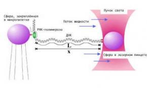 Биологи измерили силу отдельной молекулы фермента