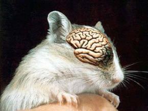 Ученые скрестили мышь и человека