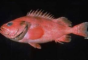 На Аляске поймана рыба возрастом 200 лет