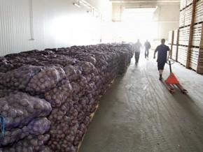 За пять месяцев Украина нарастила экспорт овощей на 53%