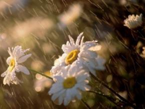 В Украине будет жарко и дождливо в течение целой недели