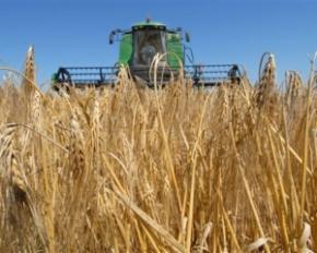 Експорт зерна врожаю 2013 стане найбільшим в історії України