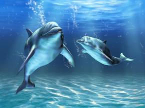 Дельфины обращаются друг к другу по имени, - биологи