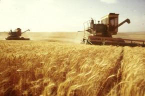 Украина начала активно экспортировать зерно нового урожая