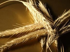 Украина запретила ввоз зерна и кормов из России