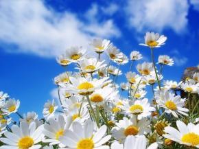 Літо в Україні затягнеться до середини жовтня, – народний синоптик