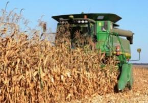 Україна увійде до трійки найбільших світових експортерів кукурудзи