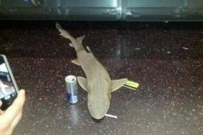 В нью-йоркском метро обнаружили мертвую акулу