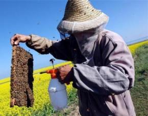 Україна - провідний світовий виробник меду