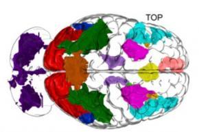 Вчені з'ясували принцип роботи мозку в процесі мислення