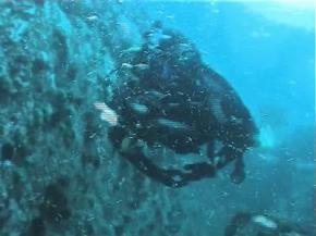 В Японському морі виявлено 200 нових живих організмів