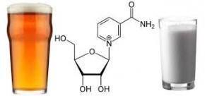 Вчені пропонують лікувати ожиріння за допомогою молекули яка міститься в пиві