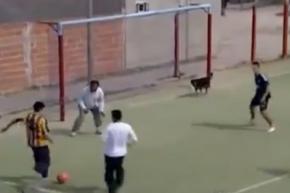 Пес забил гол на футбольном матче в Аргентине