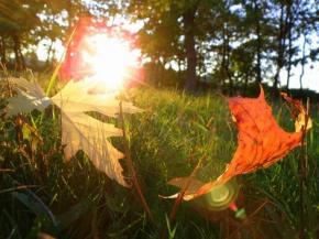 Бабье лето в Украине переносится на октябрь